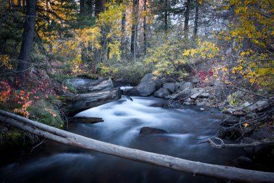 Fall Colors Lee Vining Creek