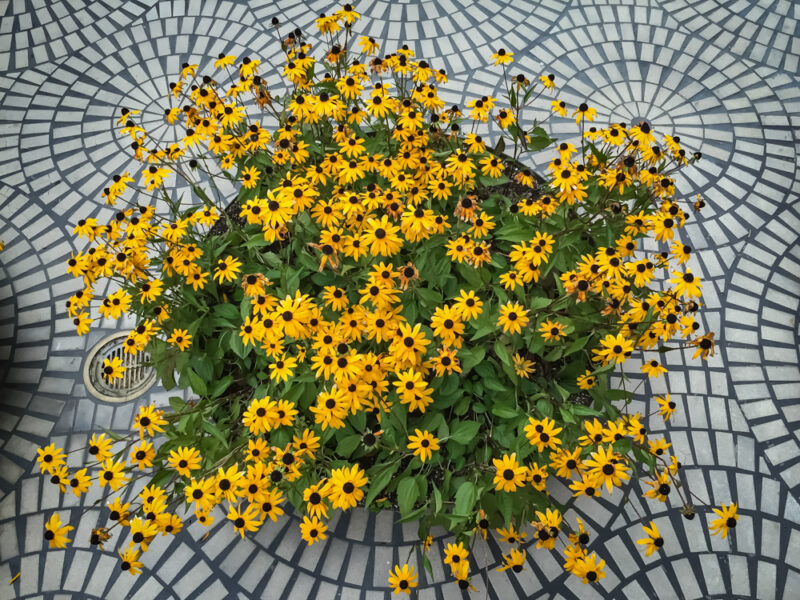 Patterns flowers on floor