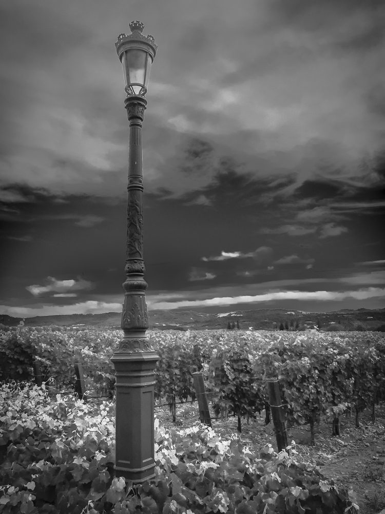 Winery vinyard with rustic lamp