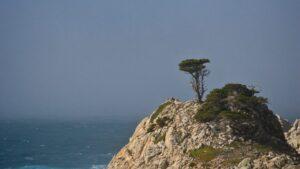 lone cypress tree on point lobos coast
