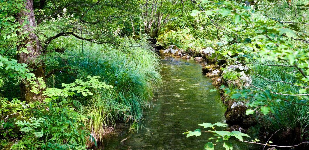 Peaceful Stream 1 e1634493817977